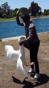 auntie vs swan.jpg